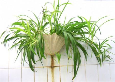12 best beginner garden plants