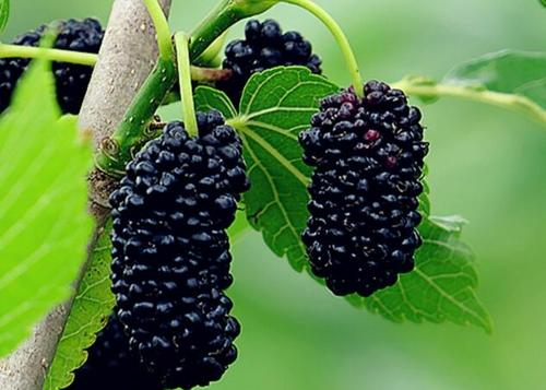 9 best berries to grow