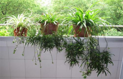9 best plants to grow indoors