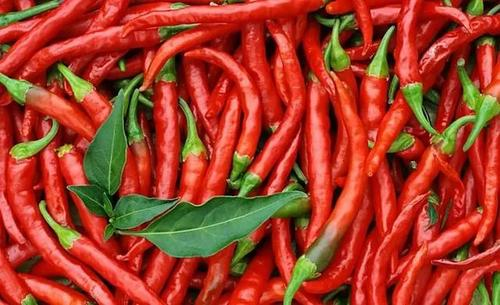 care for pepper