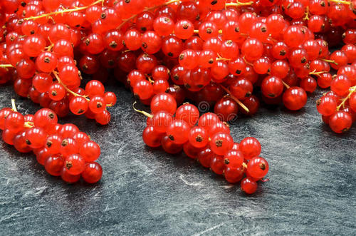 care for redcurrant