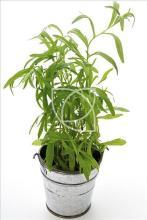 11 best edible plants to grow indoors