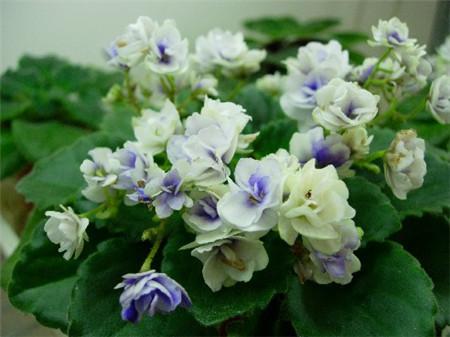 10 best flowering house plants