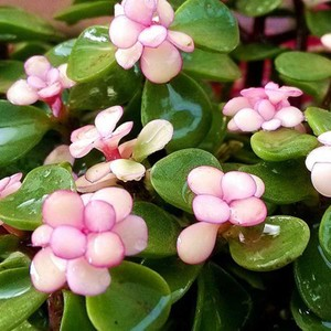 6 best evergreen plants for containers