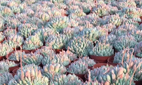 grow a succulent