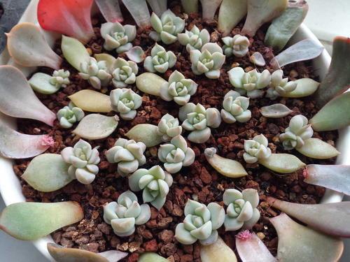 Porcelain plant profile