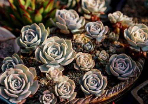 Porcelain plant