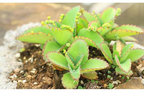 6 best succulents growing in summer.