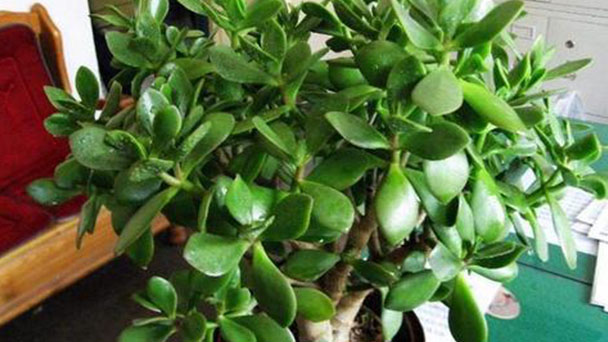 4 best herbs to grow indoors