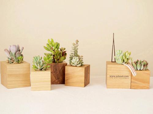 8 best containers for succulents