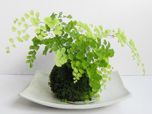 10 best winter herbs