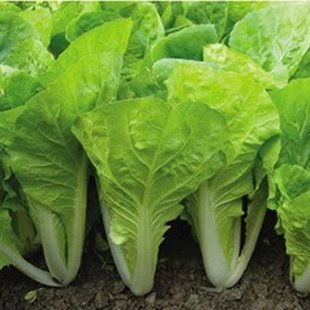 5 best veggies to grow indoors