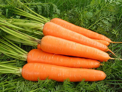 6 best vegetables to plant for beginners