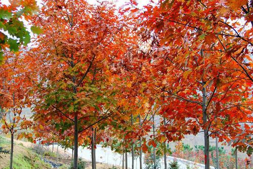 8 best trees to grow in backyard
