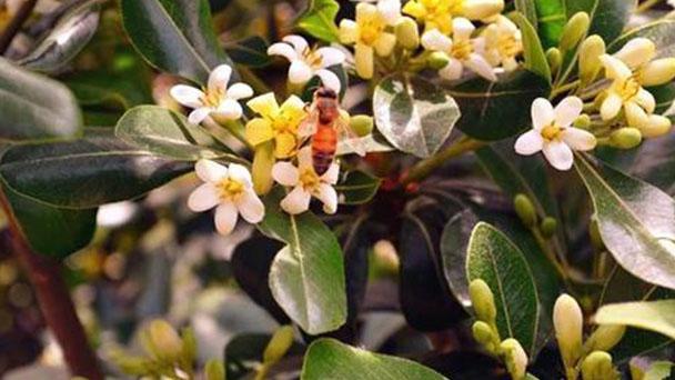 10 best smelling flowers