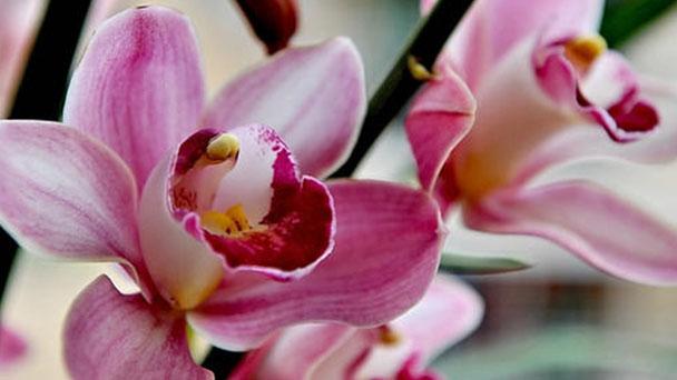 5 best flowers for mom