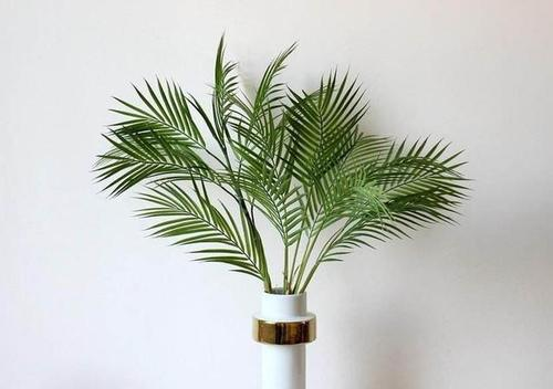 methods of propagation of Areca palm