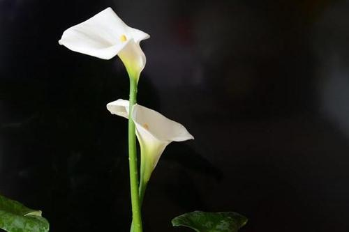 The most 10 beautiful flowers in the world