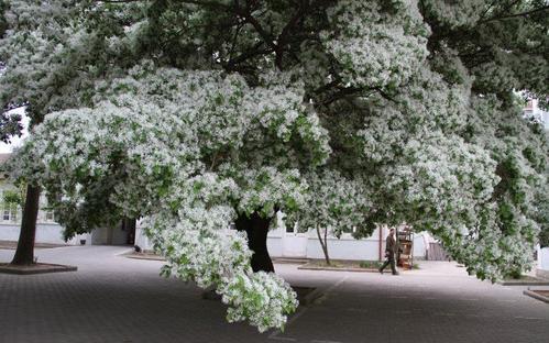 propagate fringe tree