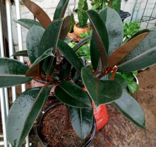 10 best plants for balcony