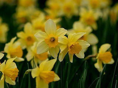 10 most popular flowers