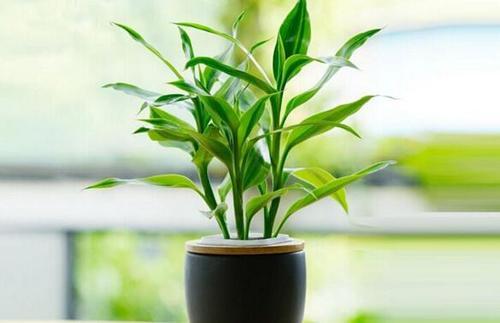 Best low light indoor plants