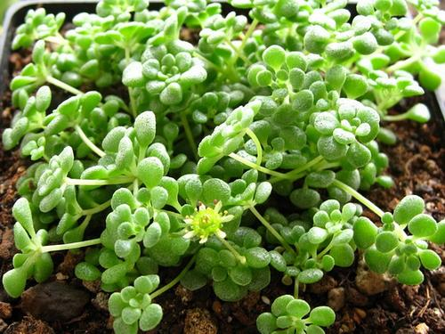 Best plants for outdoors