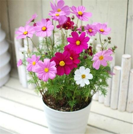 Best outdoor potted plants
