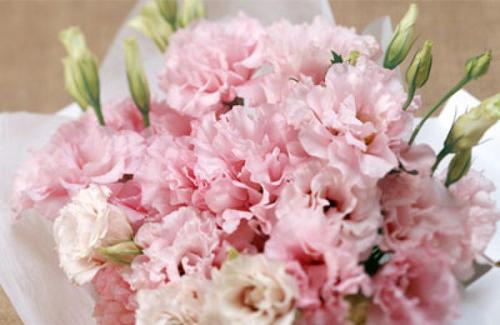 propagation methods of carnation