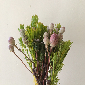 5 of the best flowers for dried flowers