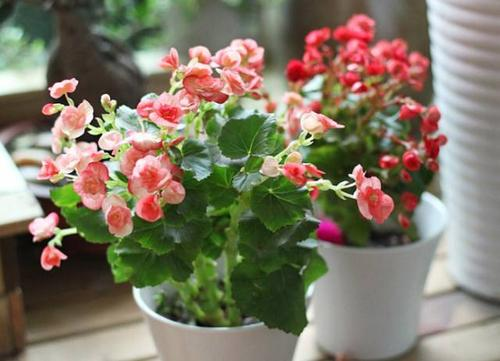 9 best hanging plants for indoors and outdoors