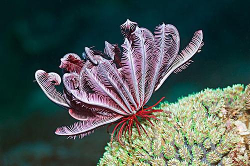 10 best indoor succulents