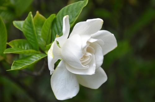 7 good smelling flowers