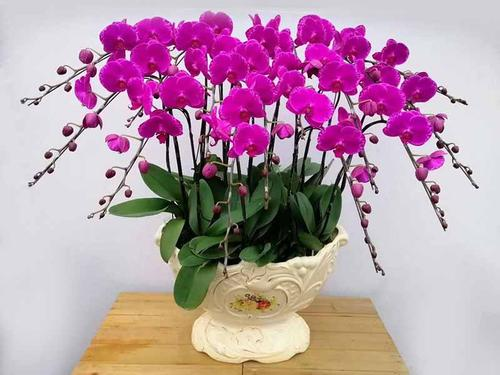 care for Moth Orchids