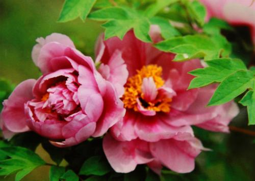 10 most popular flowers in the world