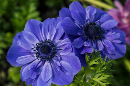 The 15 easiest plants to grow for beginners