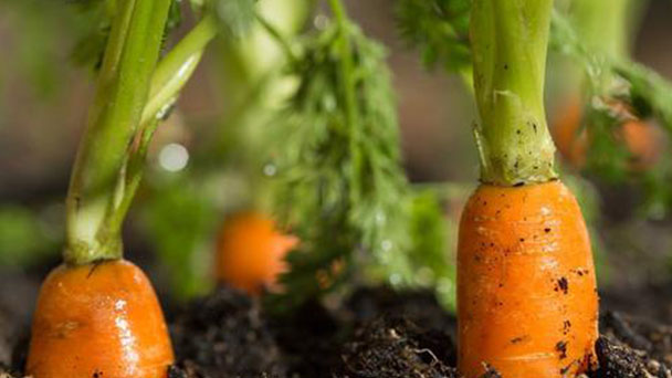 6 best vegetables to grow in raised beds