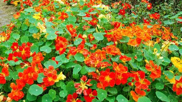 12 cheapest online flowers