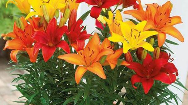 6 indoor plants dangerous to children & pets