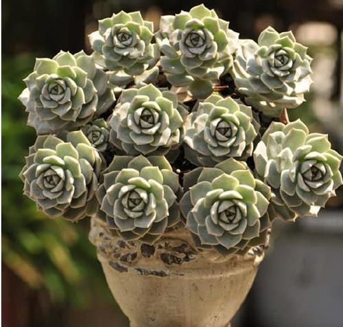 10 of the most popular succulents