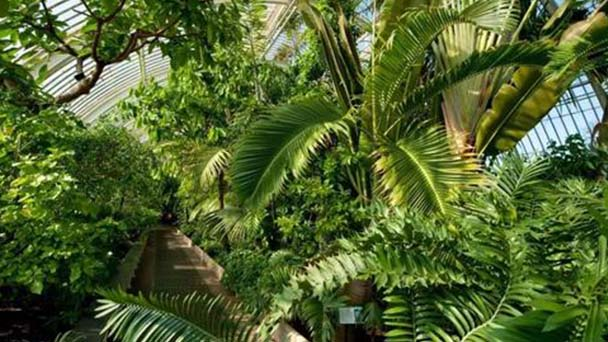 Windmill palm-how to grow and care for it