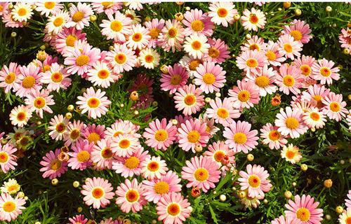 8 best flowering plants for pots