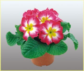 5 flowers bloom in winter