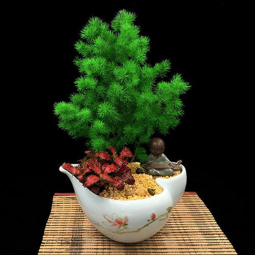 Best Indoor Tree - Ming Fern