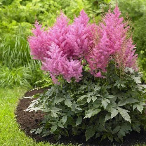8 best flowers for shade