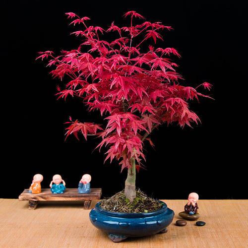 10 best trees to grow in pots