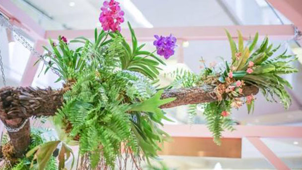 Staghorn fern (Platycerium wallichii) profile