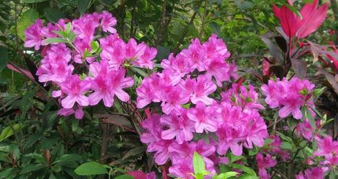 13 best shrubs for shade