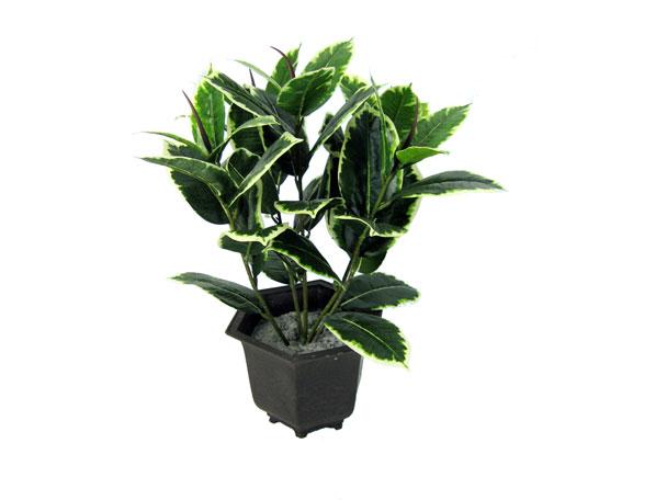 Rubber plant - most common house plant