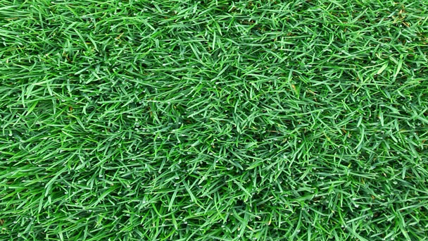 5 Most Common Lawn Diseases & How to Treat Them